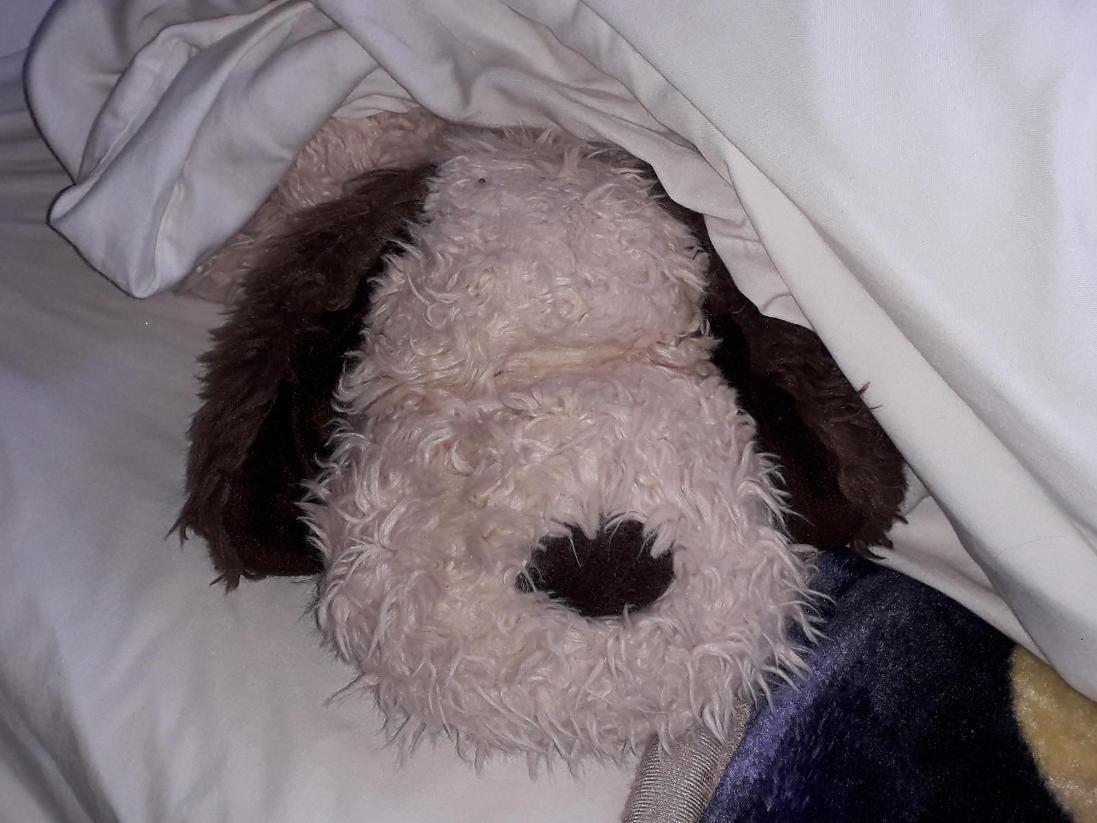 Mr Snuggles